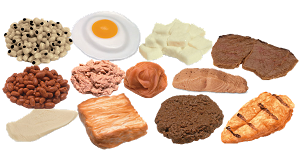 Protein Foods Model Kit